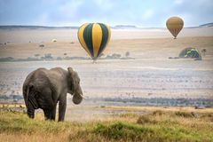 African  Elephant. African elephant ,  foggy morning, ballons landing on background,  Masai Mara National Reserve, Kenya Stock Photography