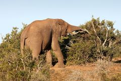 Free African Elephant Stock Images - 6710744