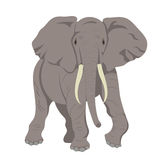 African elephant. An illustration of an african elephant Royalty Free Stock Images