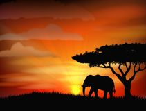 African elephant against a perfect South African sunset sky Royalty Free Stock Photos