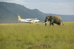 African Elephant and airplane from grasslands of Lewa Conservancy, Kenya, Africa Royalty Free Stock Photos