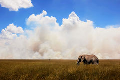 African elephant in the background of the sky . Royalty Free Stock Images