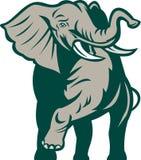 African elephant charging Stock Image