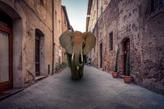 African elephant in a city. African red elephant charging in a city Stock Image