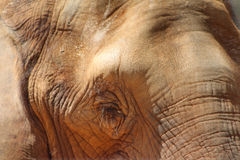 African Elephant Eye Close-up Royalty Free Stock Photography