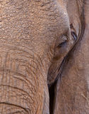 African Elephant: face of a giant Royalty Free Stock Images