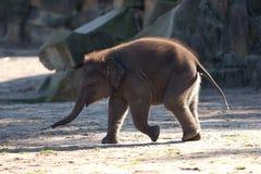 African Elephant Family. Baby elephant. Photo taken on: 2009 Stock Photos