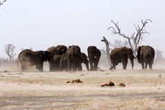 African elephant family at a waterhole Stock Photo