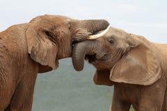 Free African Elephant Greeting Stock Photos - 22963903