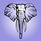 African elephant head. The head of an elephant on colored background stock images