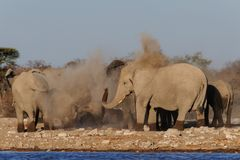 African elephant herd make a dust bath, etosha nationalpark royalty free stock images