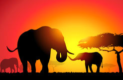 African Elephant -. African Elephant is a  illustration Royalty Free Stock Photo