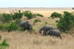African elephant in Kenya's Maasai Mara Royalty Free Stock Image