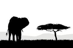 African Elephant & landscape. Is my own   illustration Stock Photos