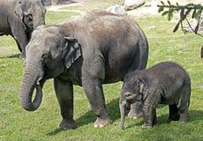 African elephant 2 Royalty Free Stock Photo