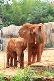 African elephant mother with her baby Stock Photo