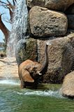 African elephant in natural environment standing under the water Royalty Free Stock Images