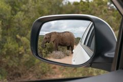 African elephant reflected in rear view mirror. Safari game drive in African wilderness stock images