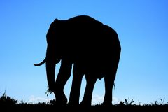 African Elephant Silhouette Royalty Free Stock Image