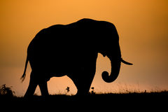 African Elephant Silhouette Royalty Free Stock Photo