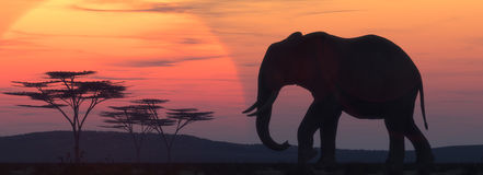 African elephant silhouette Royalty Free Stock Photography