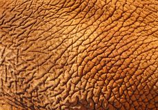 The African elephant skin texture background. Skin of elephant.The African elephant has beautiful skin royalty free stock image