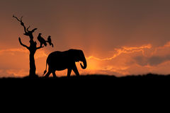 African elephant sunset. African scene with silhouette elephant tree eagle sunset Royalty Free Stock Image