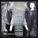 African Elephant UK Postage Stamp Stock Photo