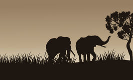 African elephant walking of silhouette. With gray backgrounds Royalty Free Stock Photo
