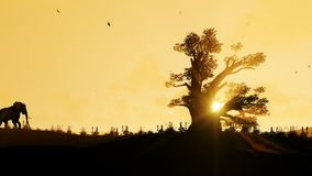African elephant walking towards a baobab tree agains beautiful sunrise, zoom out. Hd video stock video footage