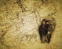 African Elephant wallpaper Royalty Free Stock Photo