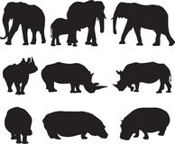 African elephant,white rhinoceros and hippo silhouette contour Royalty Free Stock Image