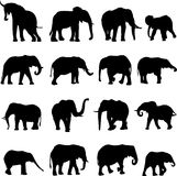 African elephants vector illustration