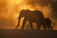 Free African Elephants Stock Images - 207515054