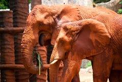 African elephants Stock Photography