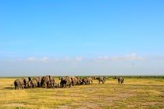 African elephants, Amboseli National Park, Kenya Stock Photography