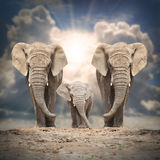 The African elephants. Royalty Free Stock Photos