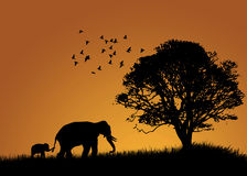 African Elephants Landscape. African elephants in the sunset landscape royalty free stock images
