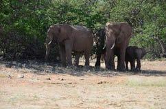 African elephants, Namibia Royalty Free Stock Photos