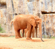 African elephants standing on sandy soil Royalty Free Stock Photos