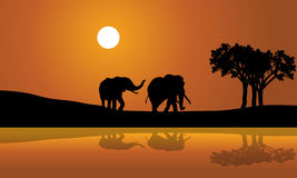 African Elephants at Sunset africana Royalty Free Stock Photography