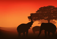 African evening vector. Elephants walking in african savannah at sunset - bright evening landscape Royalty Free Stock Image