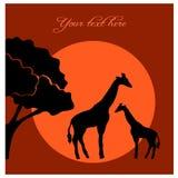 African evening savanna Stock Image