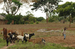 African farm boy Royalty Free Stock Images