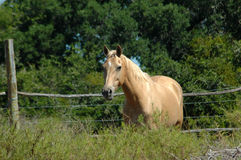 African farm horse Royalty Free Stock Images