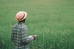 Free African Farmer Holding Tablet For  Research In Organic Rice Field.Agriculture Or Cultivation Concept Royalty Free Stock Images - 215765679