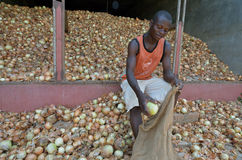 African farmer Stock Images