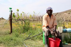 African Farmer. An African man farmer worker sits in front of a vineyard on a farm in the Karoo, South Africa royalty free stock photography