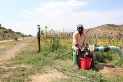 African Farmer. An African man farmer worker sits in front of a vineyard on a farm in the Karoo, South Africa Stock Photo