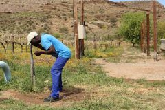 African Farmer. An African man worker farmer takes a sip of water on a farm in the Karoo, South Africa stock photography